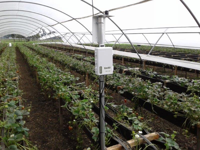 Instalacion de equipos Cultivo de Fresa Unal-2