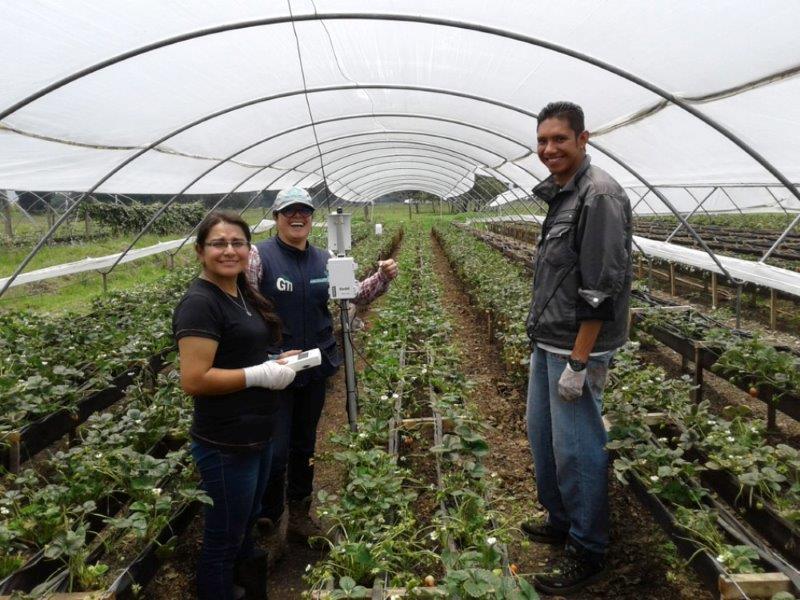 Instalacion de equipos Cultivo de Fresa Unal
